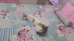 Doação de linda gatinha