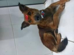 Cachorra porte médio adoção