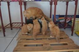 Filhotes gatos persas original