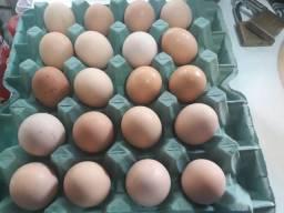 Ovos orgânicos frecos criação própria