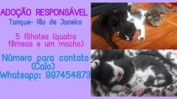 *ADOÇÃO RESPONSÁVEL (TANQUE- RIO DE JANEIRO)*