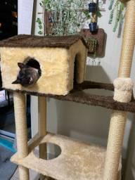 Casa arranhador para gato