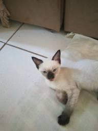 Doou gatinhos de 2 meses