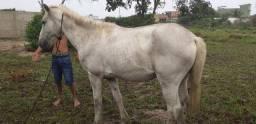 Vendo cavalo ou troco zap *