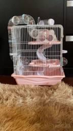 Hamster Anão Russo - Fêmea - 3 meses