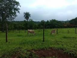38 hectares Terenos MS