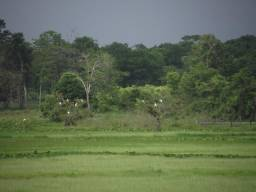 Terra no Amapa!
