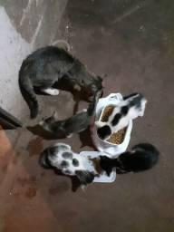 Urgente!!! Pedido de Ajuda - Castração de gata de rua.