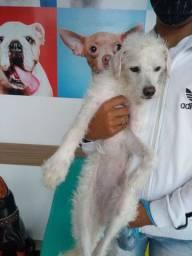 Cachorra sem raça não definida para doação
