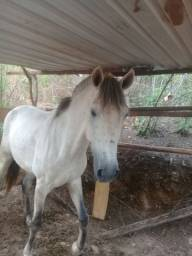 Cavalo esquipador