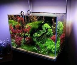 Monte se aquario plantado tudo para se primeiro plantado