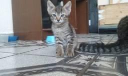Doacao filhotes gatinhos