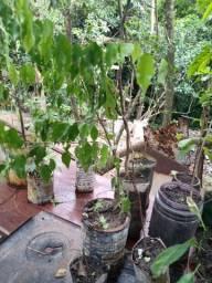 Fruteiras, plantas e ervas