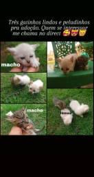 Gatinhos disponíveis para adoção