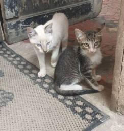 Adoção responsável de 3 gatinhos machinhos!