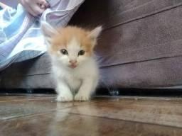 Doa-se um gatinho macho