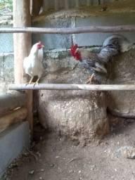 Vendo aves garnizé