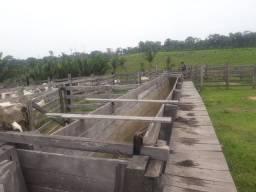 Fazenda porteira fechada - Apuí