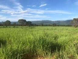 Excelente Fazenda de 1.210 Hectares, 70% Formada em Formosa-GO