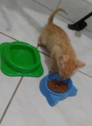 Doação de gato, Macho