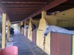 Aluguel de baias para cavalos - ilha de guaratiba rj
