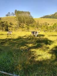 Terreno ideal para Haras com 48.000m², Área plana com Lago (Estrada Monteiro Lobato SP-50)