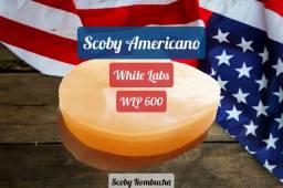 Americano Scoby - White Labs - Tam:7cm de Diâmetro