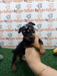 Pinscher é no Da Madre Pet Shop