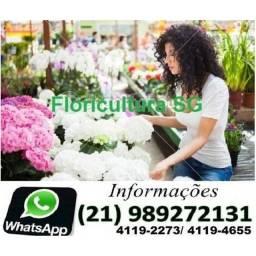 Flores niteroi 4119-2273