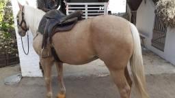 Vendo cavalo de esteira