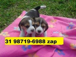 Canil Lindos Cães Filhotes BH Beagle Lhasa Poodle Basset Yorkshire Shihtzu Maltês Pug
