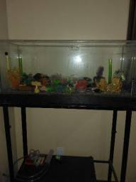Aquario com bancada