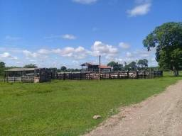 Fazenda com 726 Hectares, Estrada Caceres
