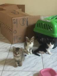 Gatinhos Adoção Entregamos