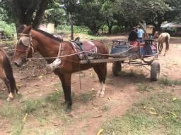 Vendo cavalo de carroça e de cela