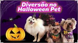 Roupas pet halloween