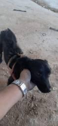 Doa-se uma cachorra