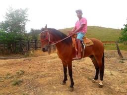 Vende-sé  este cavalo