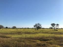 Fazenda Nova crixas 234 Alqueires | ótima localização | ac. Prazos