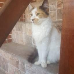 Gatos Castrados- Bem cuidados !!