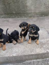 Doação cachorros machos e fêmea