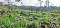 Vendo terra perto do asfalto aceito ofertas 80 mil avista