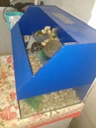 Aquaterrario para tartaruga