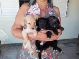 Doação 3 filhotes de cachorro