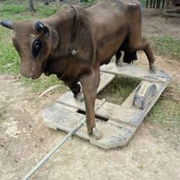 vaca mecanica