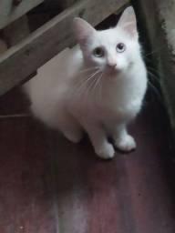 Adoção gatinhos em Niterói