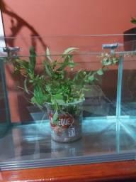 Plantas pra aquário
