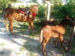 Vendo égua parida com pouco mais de um mês ja coberta 5.700