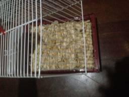 Gaiola hamster chinês