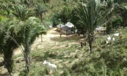 Fazenda no município de Niquelândia